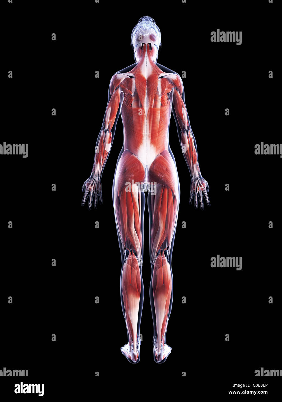 Ungewöhnlich Thorax Oberflächenanatomie Bilder - Anatomie Von ...