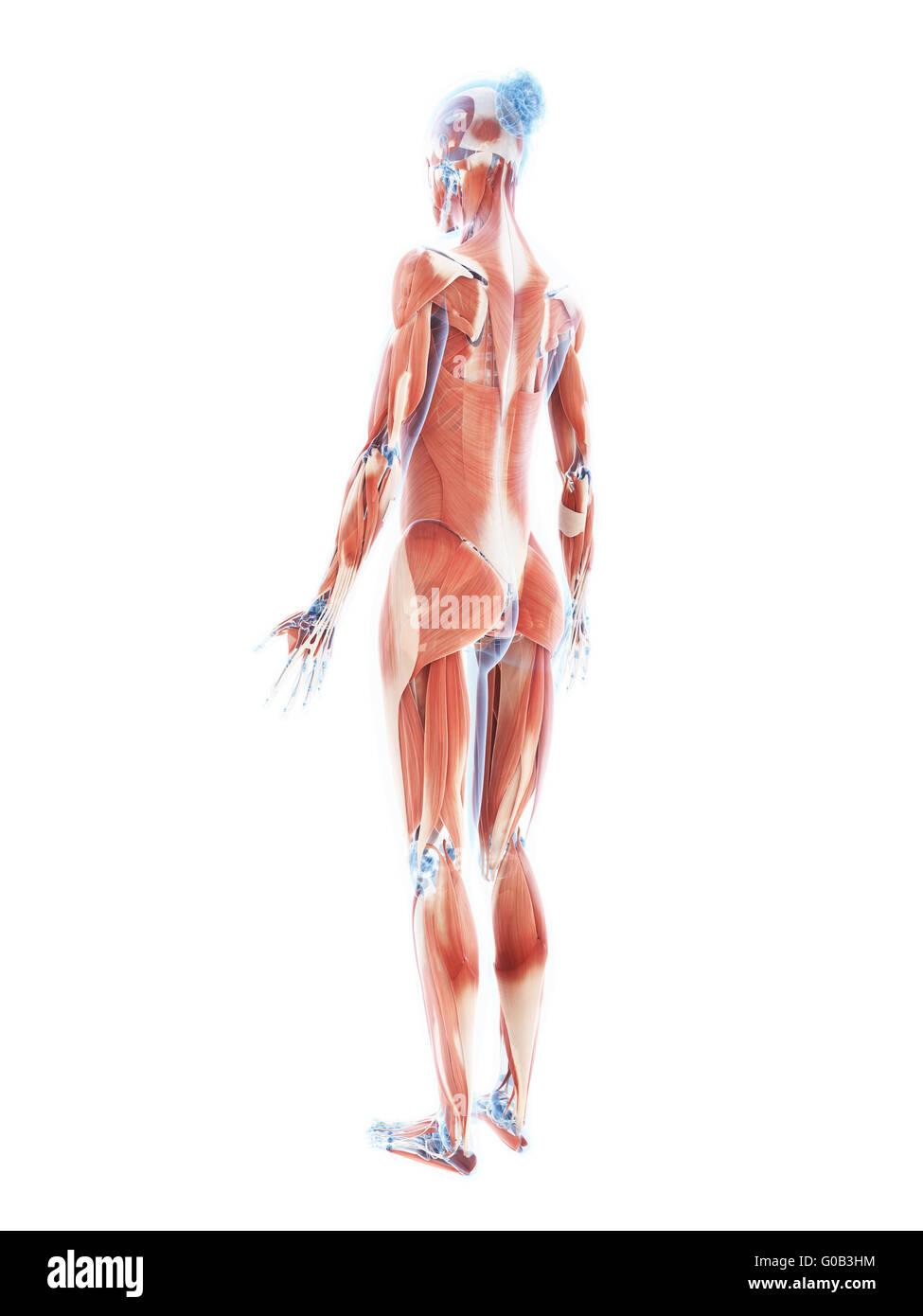Schön Brust Anatomie Weiblich Bilder - Anatomie Ideen - finotti.info