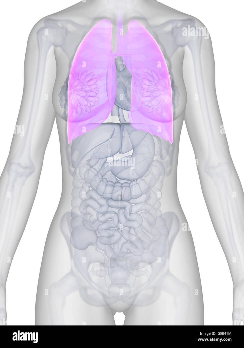 Fantastisch Komplette Anatomie Des Menschen 3d Bilder - Anatomie Von ...