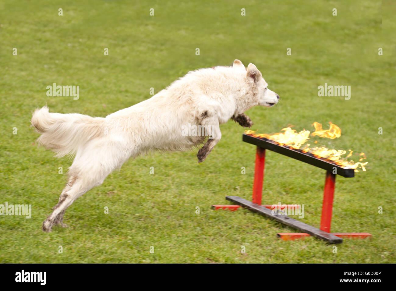 Ausbildung von einem Rescue-Hund-Geschwader Stockbild