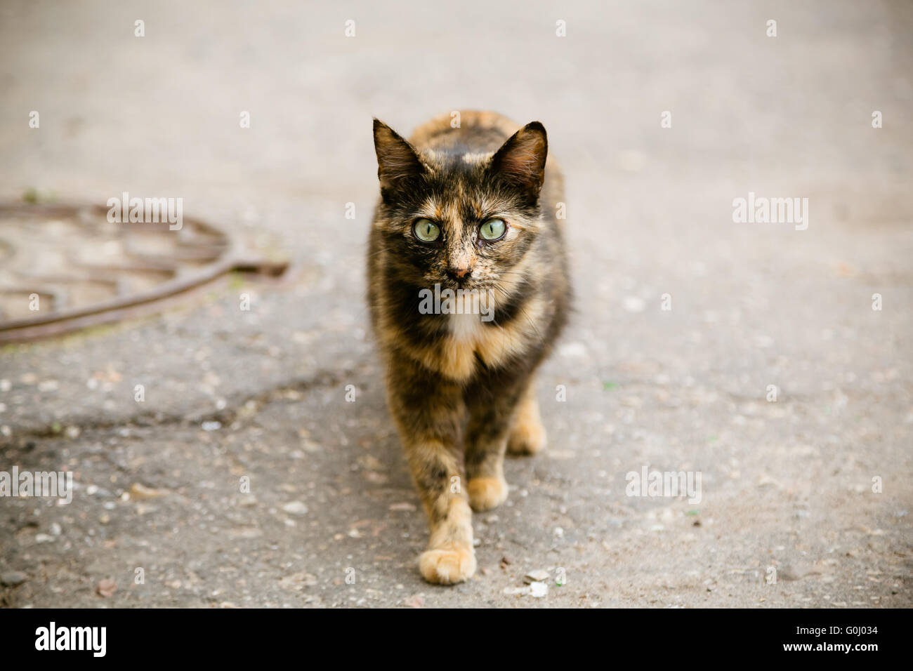 Porträt von Katze zu Fuß an der Straße Stockbild