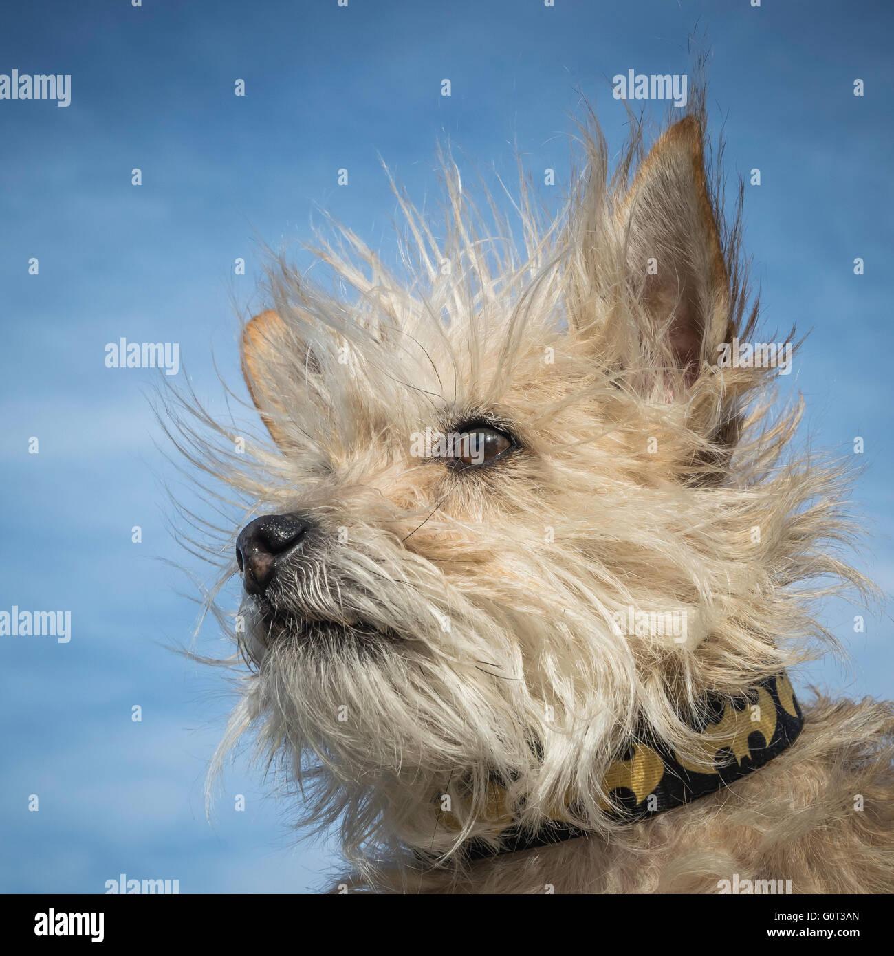 Berühmt Haar Terrier Schnauzer Mix Fotos - Die Besten Elektrischen ...