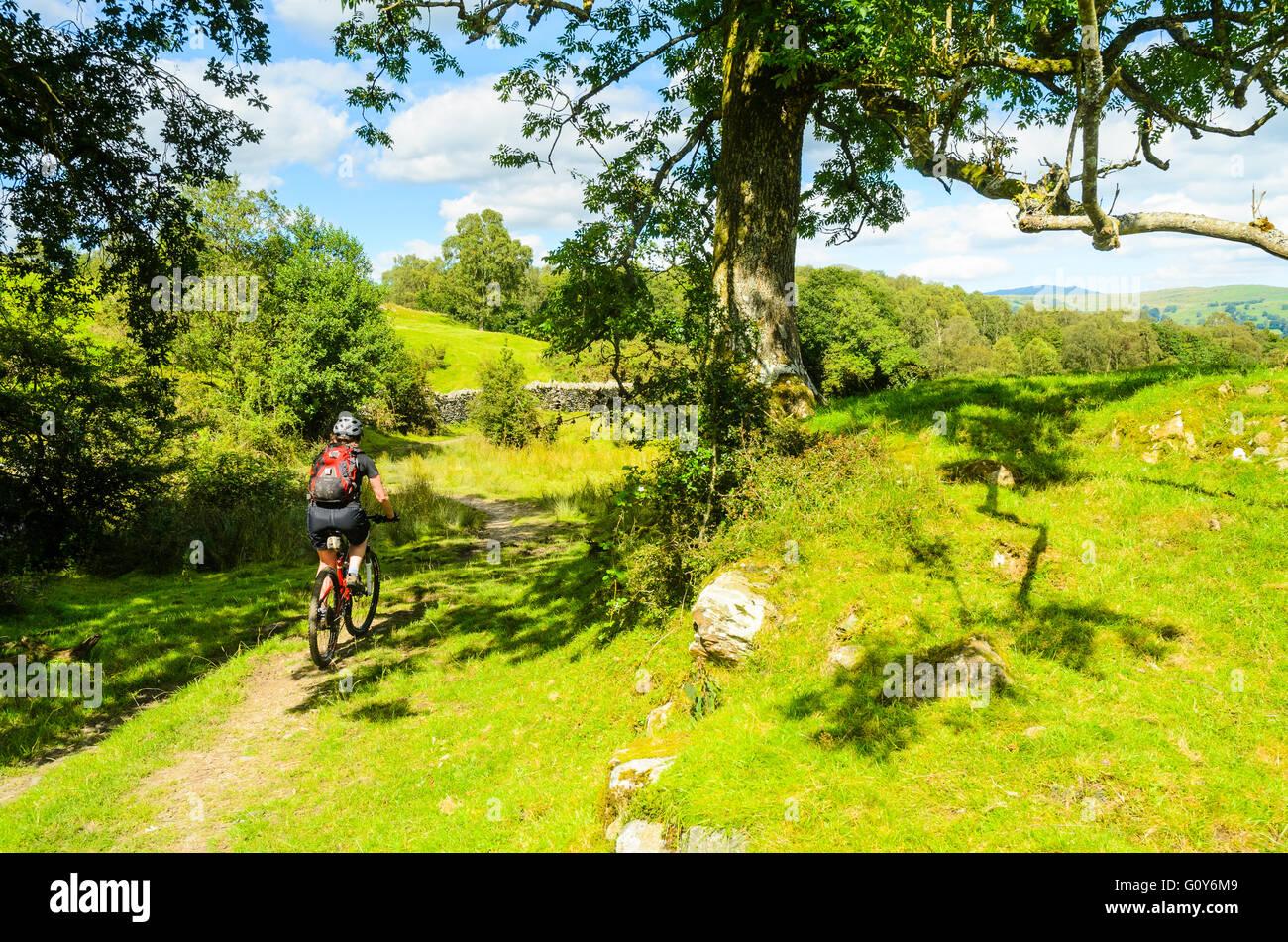 Mountainbiker auf einfache Strecke in der Nähe Blelham Tarn im Lake District Stockbild