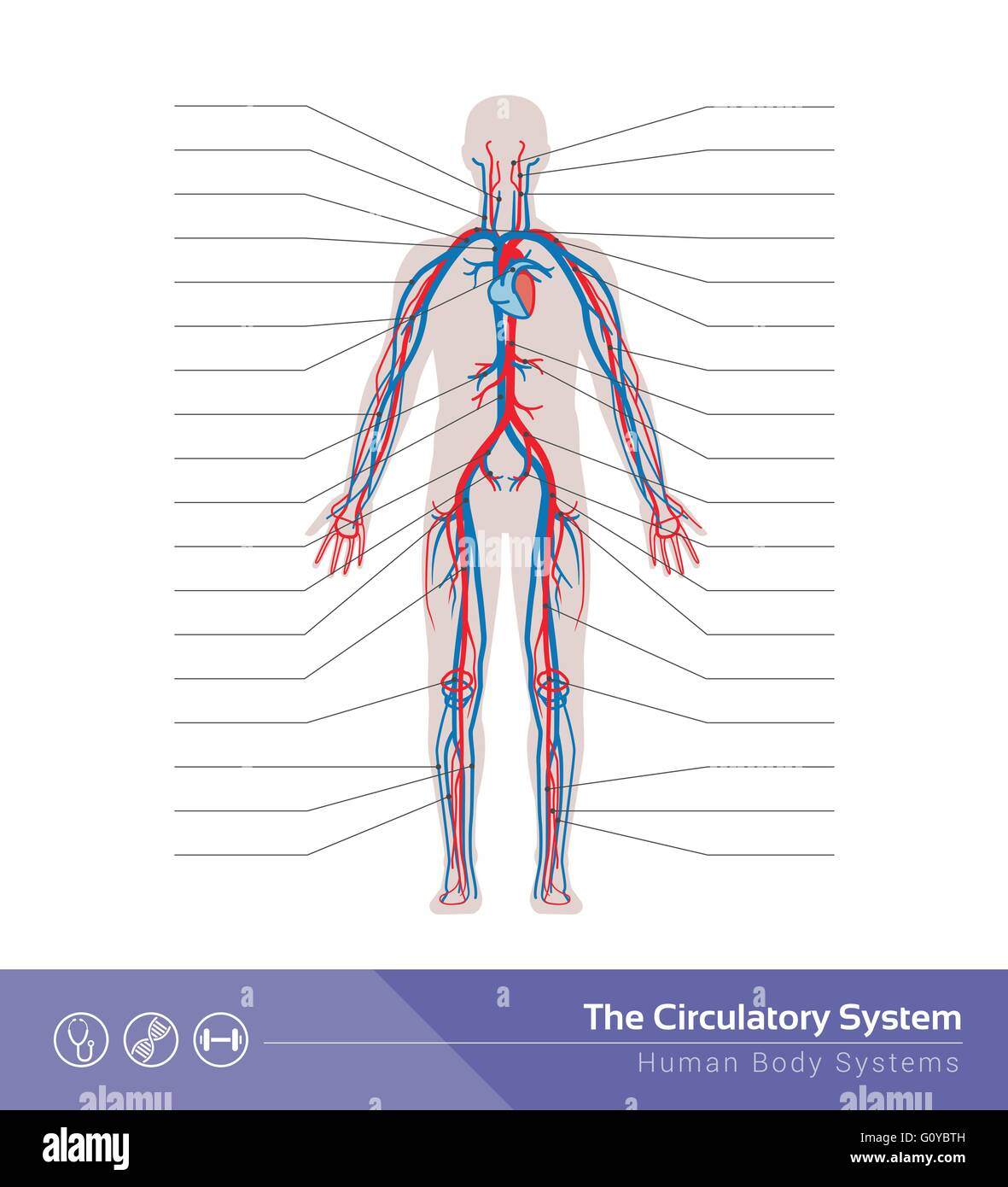 Body System Stockfotos & Body System Bilder - Alamy
