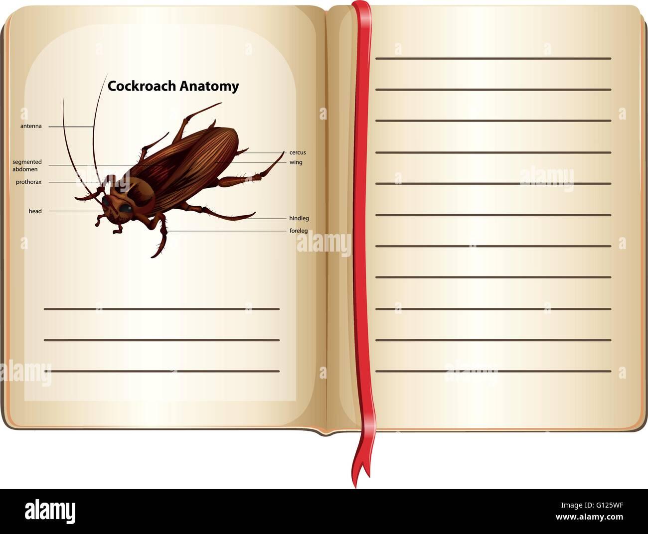 Vector Illustration Cartoon Cockroach Stockfotos & Vector ...