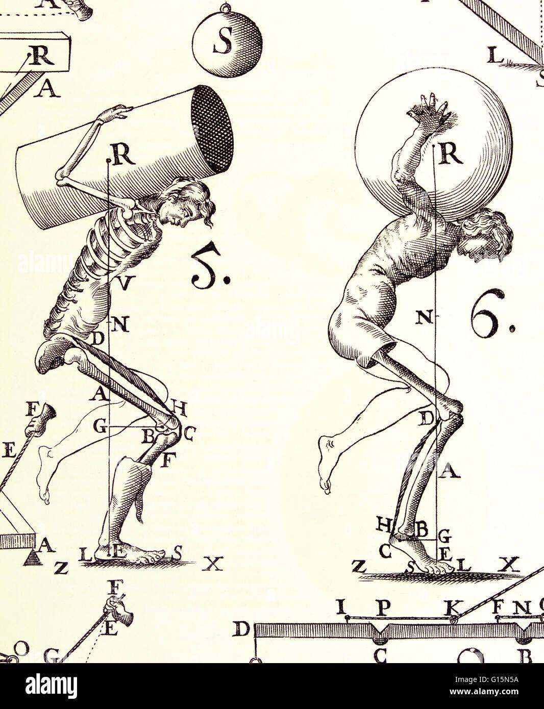 Niedlich Hebel Im Menschlichen Körper Bilder - Menschliche Anatomie ...