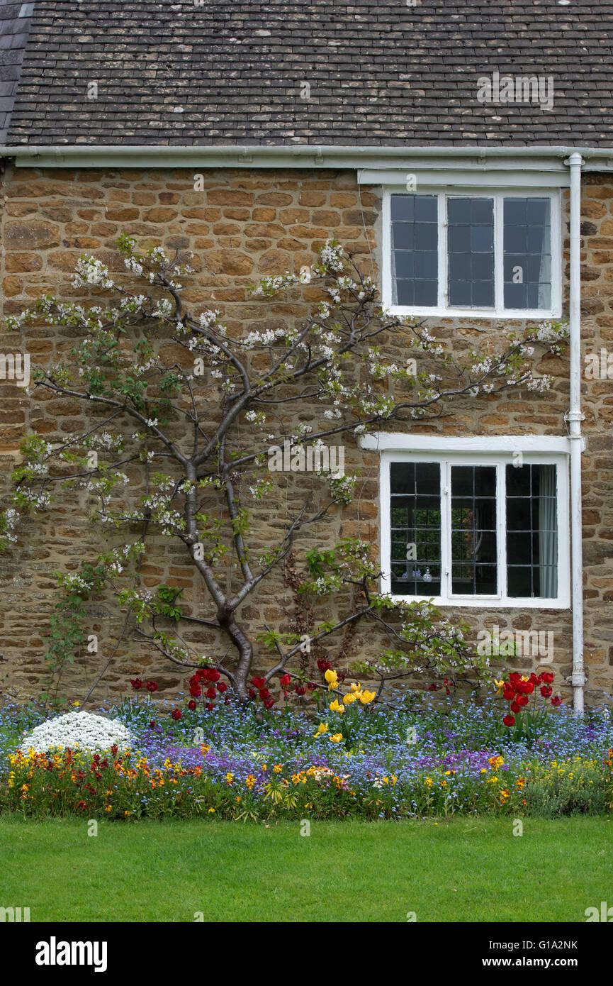 Frühling Blumen vor einer Hütte in Adderbury, Oxfordshire, England Stockfoto