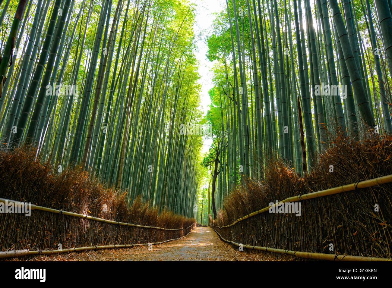 Schone Szene In Den Bambuswald Arashiyama Mit Morgensonne Filterung