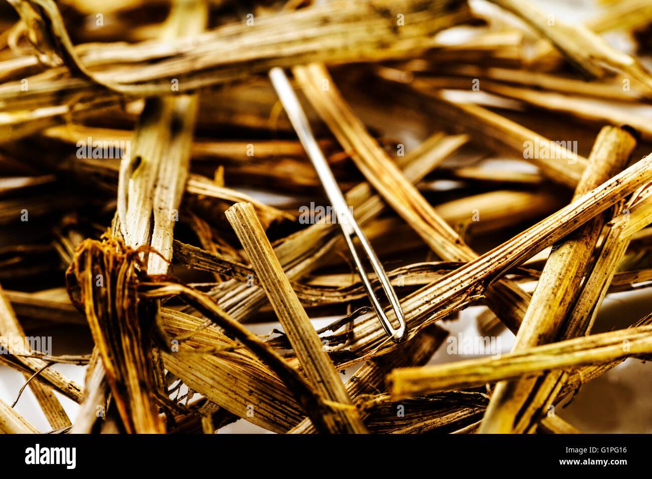 Auf der Suche nach verlorenen Nadel im Heuhaufen. Die Suche. Verloren und gefunden. Stockbild