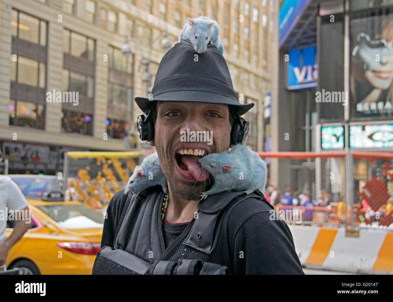 Eine Straße Straßenmusiker mit seinen drei blauen Haustierratten in Midtown Manhattan, New York City Times Stockbild