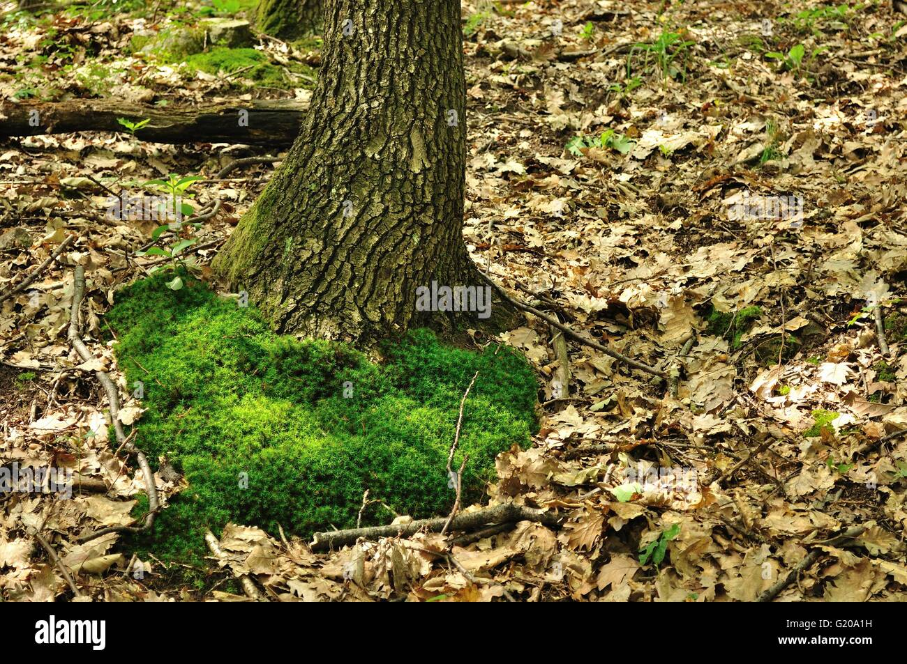 forest green moss background in stockfotos forest green moss background in bilder alamy. Black Bedroom Furniture Sets. Home Design Ideas