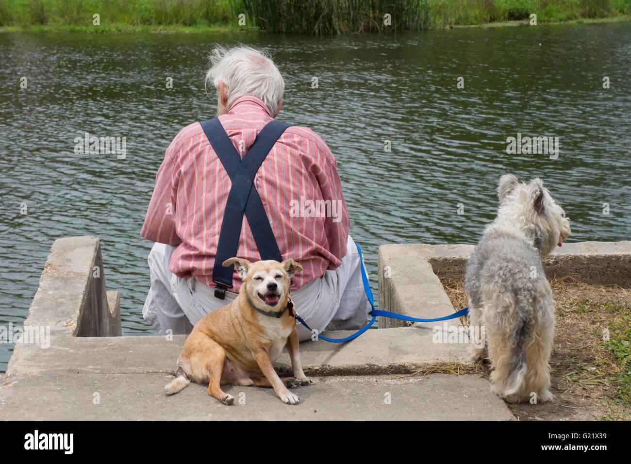 Älterer Mann das Wasser mit seinen zwei Hunden zu betrachten. Stockbild