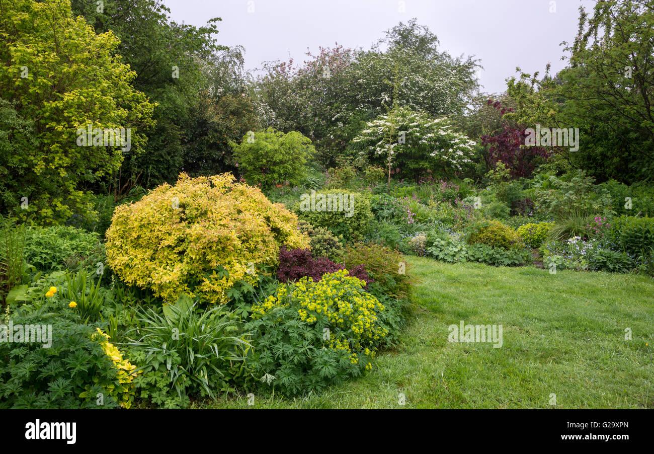 ein englischer cottage garten an einem regnerischen mai tag gemischt informelle anpflanzung. Black Bedroom Furniture Sets. Home Design Ideas