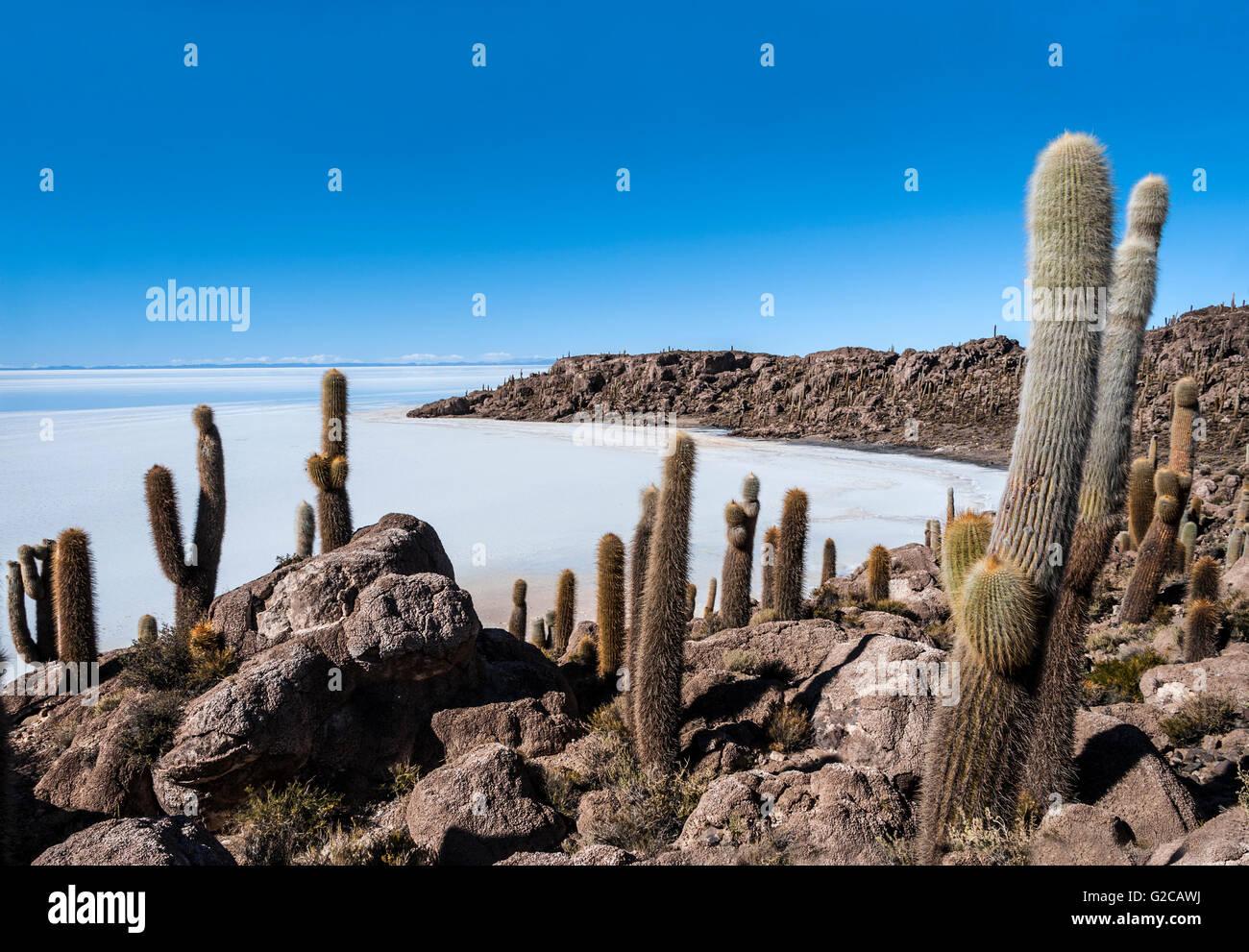 Isla de Pescadores, Salzsee Uyuni in Bolivien Stockbild