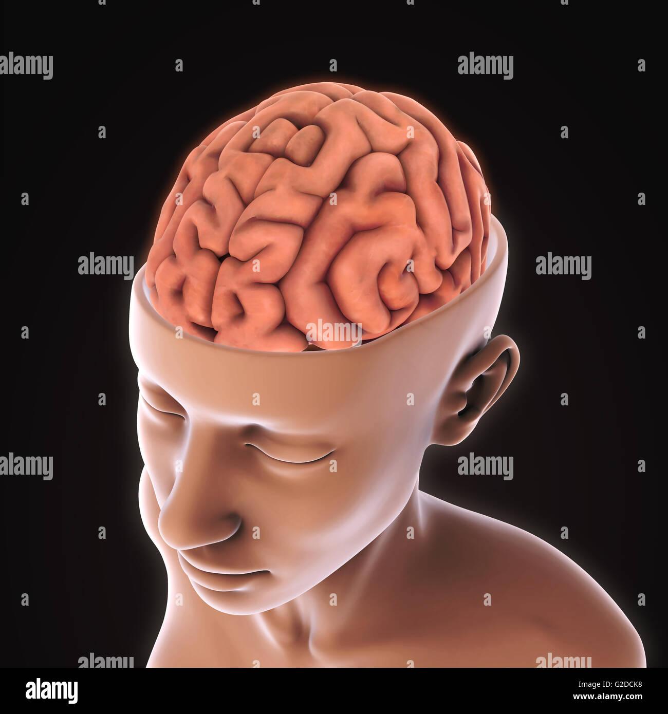 Niedlich Virtuelle Anatomie Dissektion Galerie - Anatomie Von ...