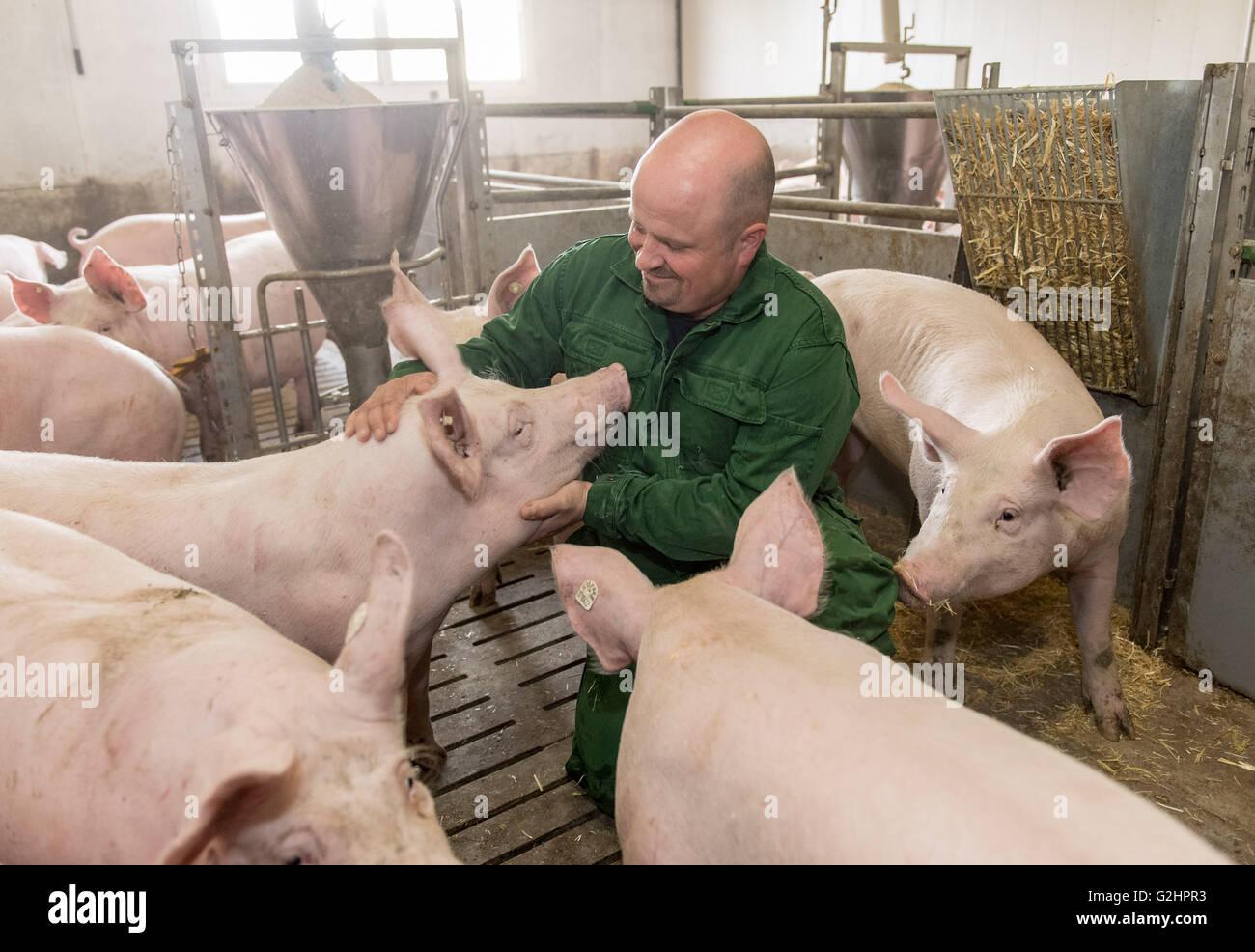 Erfreut Schwein Draht Käfig Zeitgenössisch - Die Besten Elektrischen ...