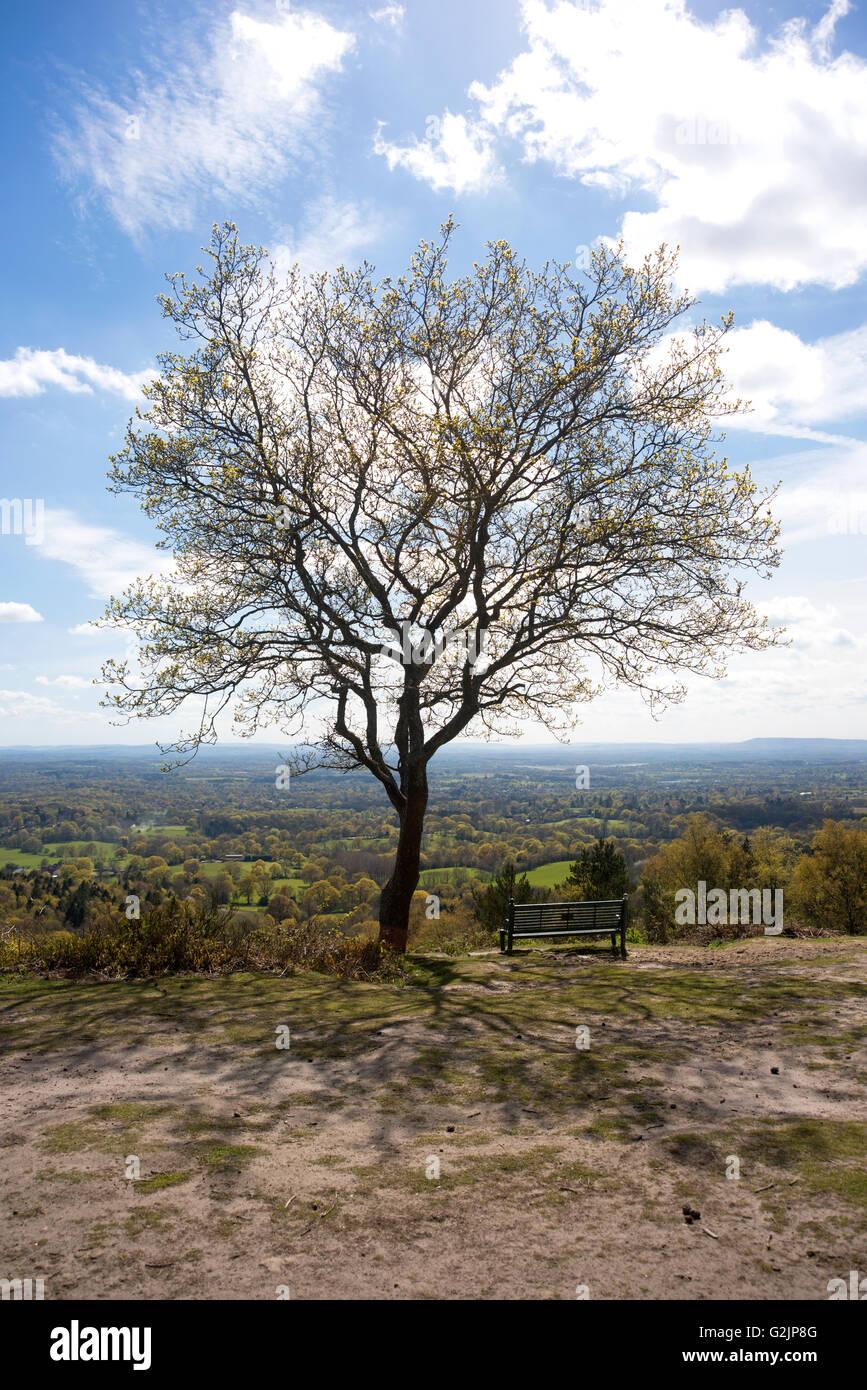 Blick über den North Downs aus Hurtwood Wald bei Peaslake, in Surrey Stockbild