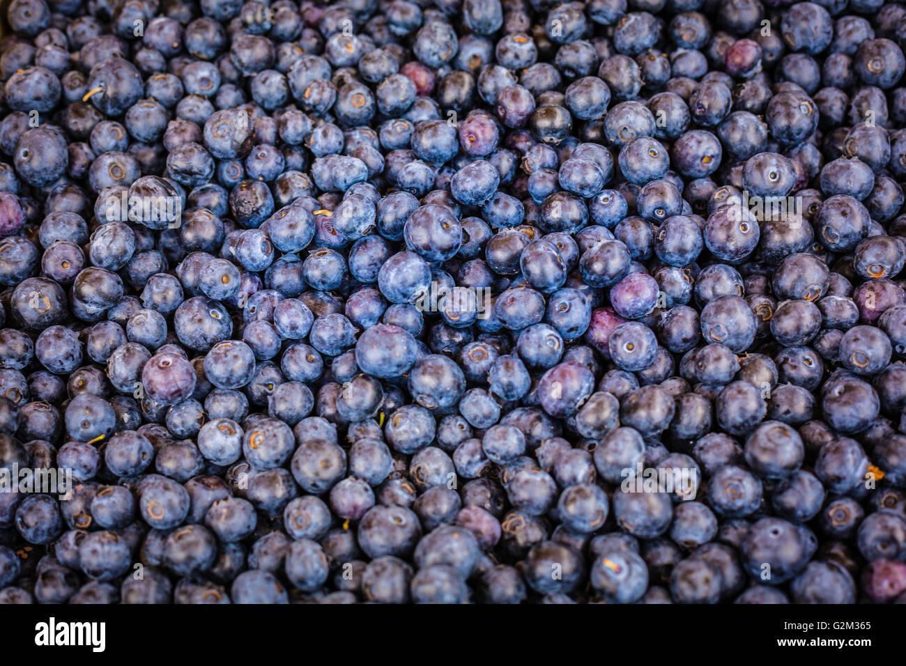Frische organische Heidelbeeren am Bauernmarkt verkauft durch das Pfund Stockbild
