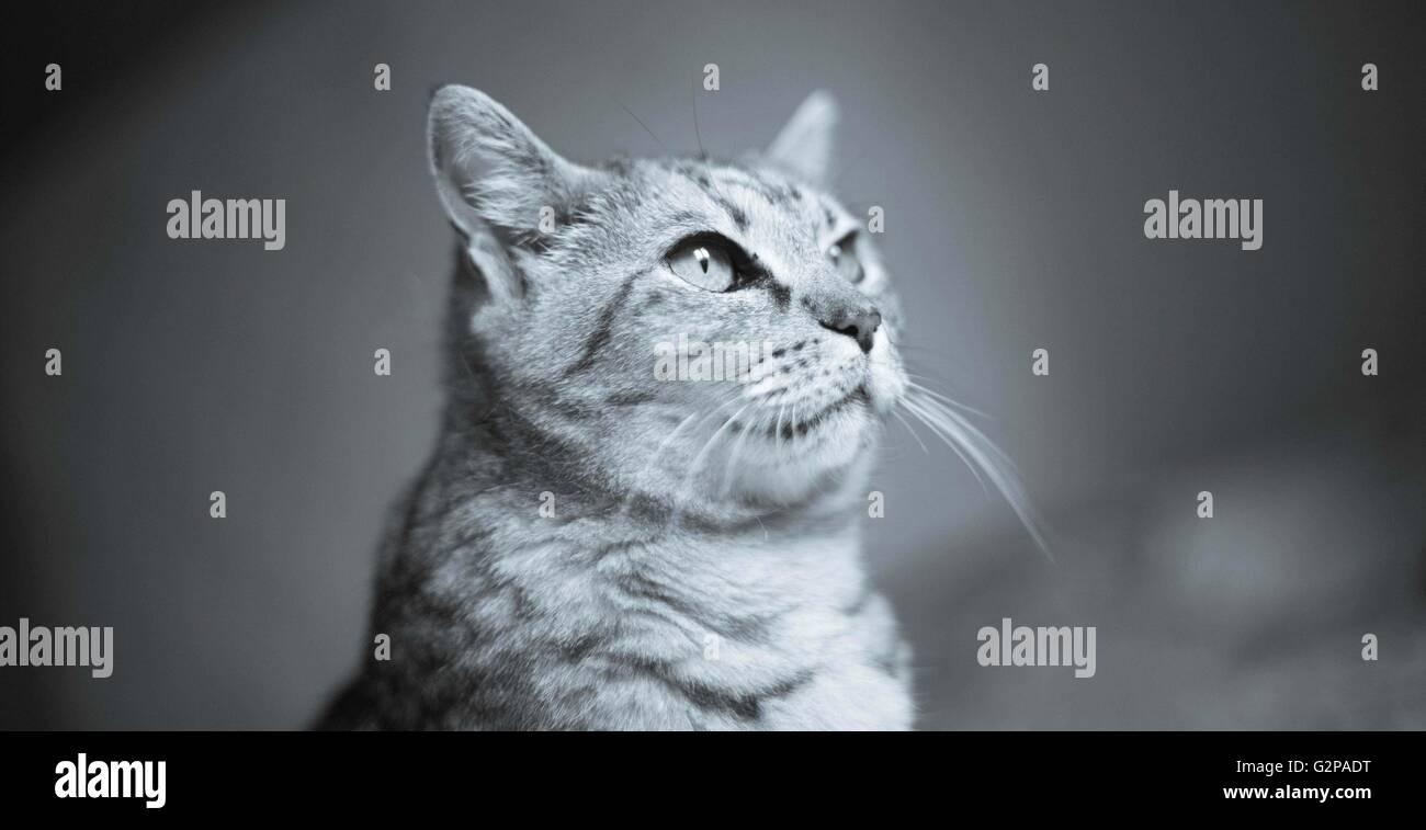 eine Hauskatze Haustier Stockbild