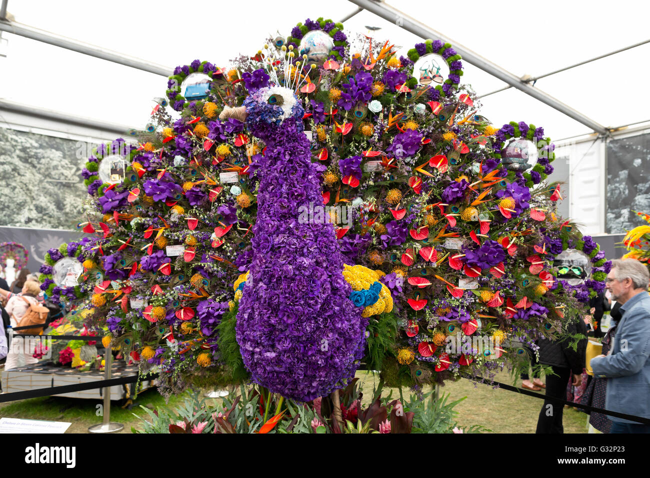 RHS Chelsea Flower Show 2016 großen Pavillon Blume Pfau Stockfoto
