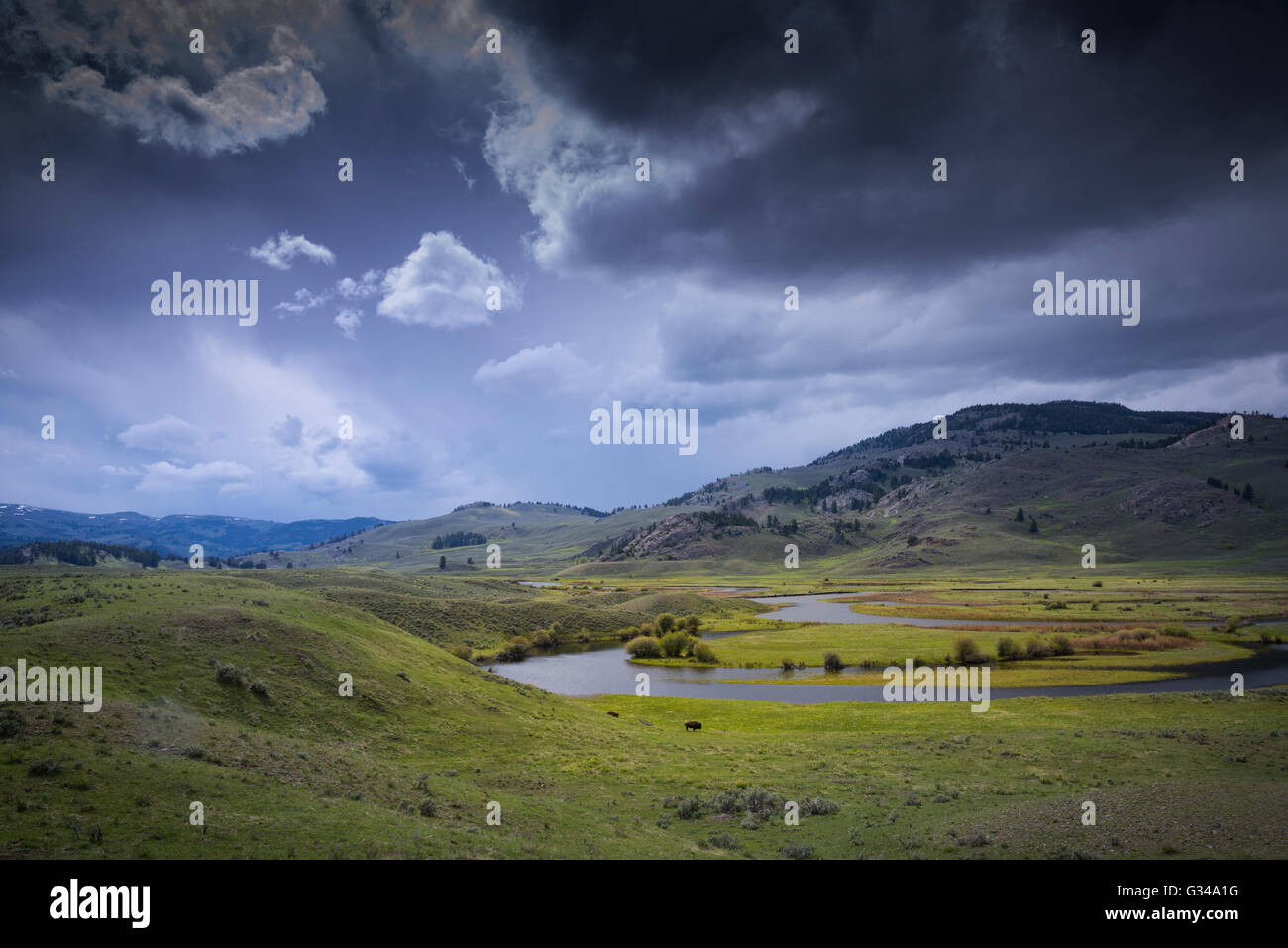 USA, Rockie Mountains in Wyoming, Yellowstone, Nationalpark, UNESCO, Welterbe, Lamar Valley, Bison Bison, Büffel, Stockbild