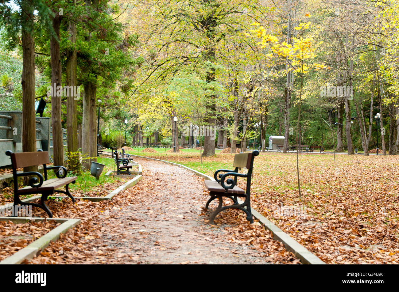 rote bl tter fallen und gelbe bank wald im park borjomi georgien stockfoto bild 105202866 alamy. Black Bedroom Furniture Sets. Home Design Ideas