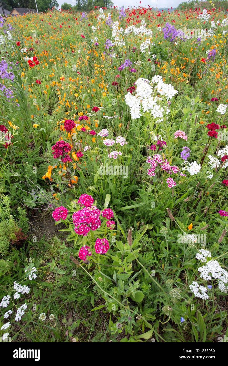 Spektakuläre Darstellung von wilden Blumen am Kreisverkehr in der Nähe limendous nousty Frankreich Stockbild