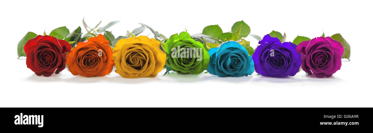 einzelne Zeile der rose Köpfe in rot, Orange, gelb, grün, Türkis, Indigo und Magenta repräsentieren Stockbild