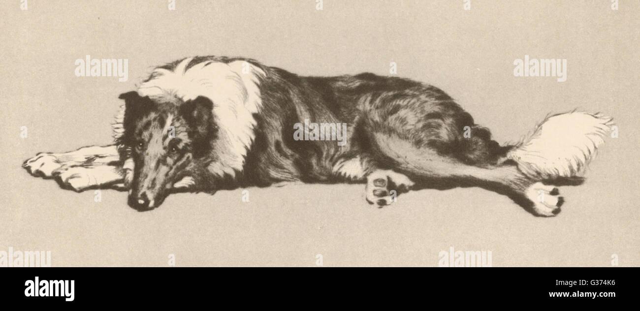 illustration von cecil aldin hunde jeden tag entspannt ein collie hund datum 1933 stockfoto. Black Bedroom Furniture Sets. Home Design Ideas