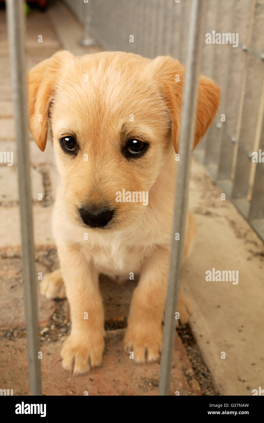 Mixed Breed Dogs Puppies For Adoption