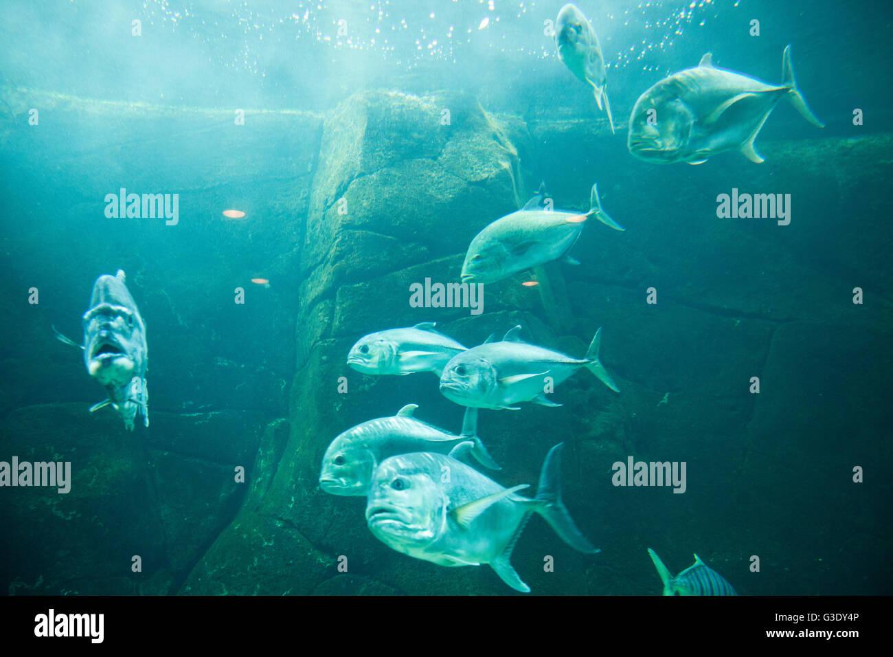 Fische aus Sicht