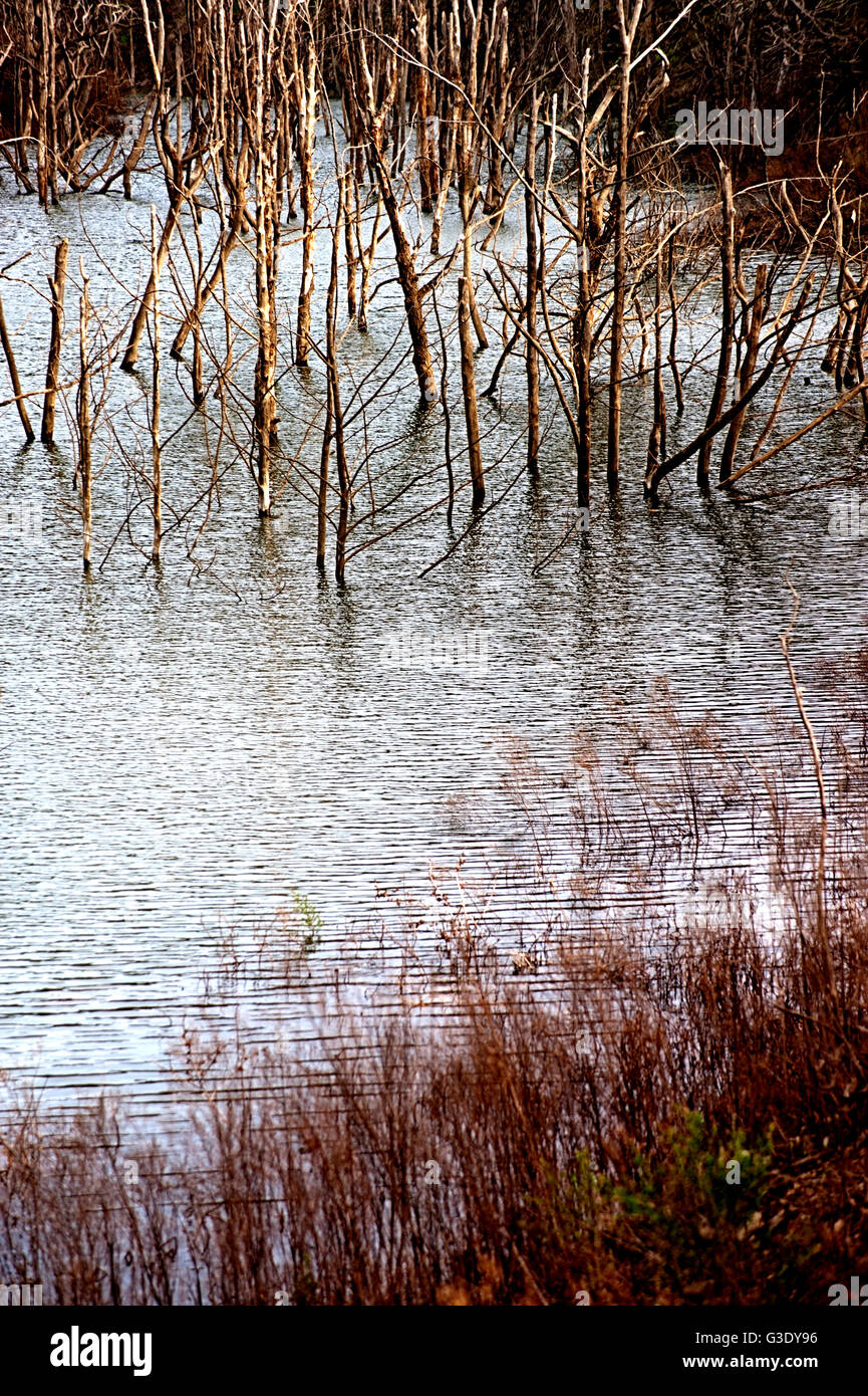 Tote Bäume in einem See Stockbild