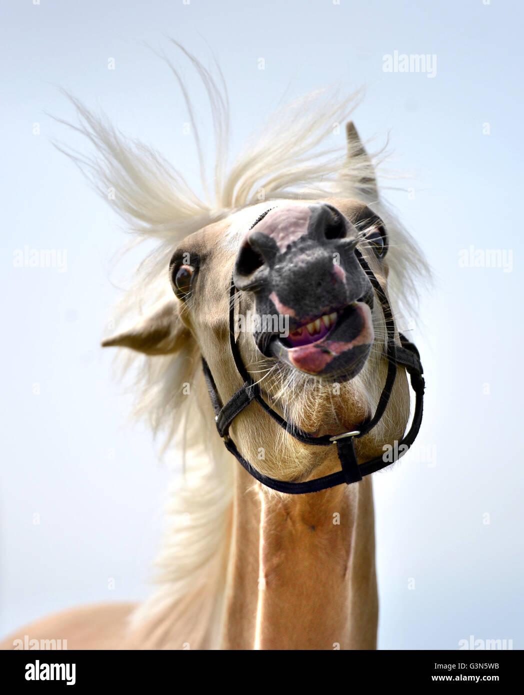 Junge blasse Pferd (Stute) Stockbild