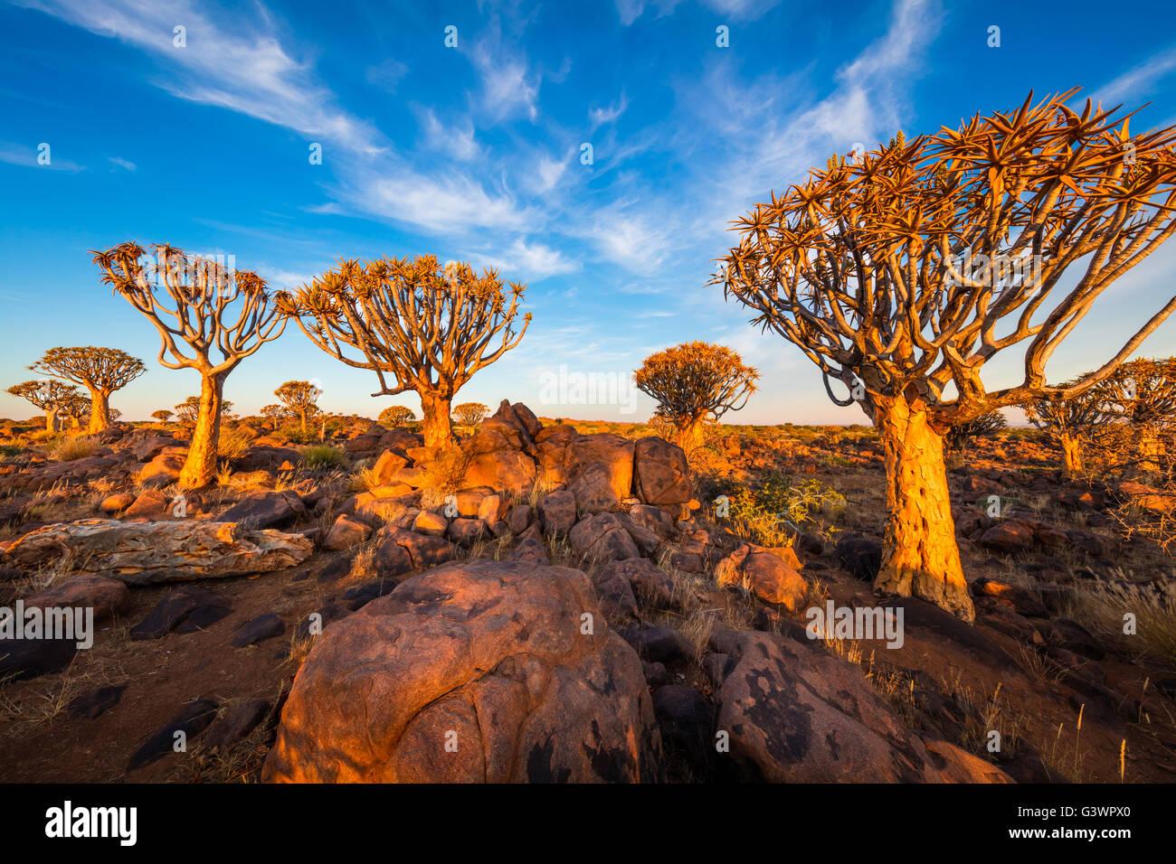 Der Köcherbaumwald (Kokerboom Woud in Afrikaans) ist ein Wald und touristische Attraktion der Süden Namibias. Stockfoto