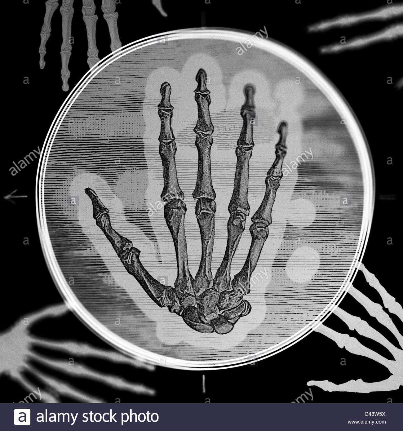 Anatomy Man 19th Stockfotos & Anatomy Man 19th Bilder - Alamy