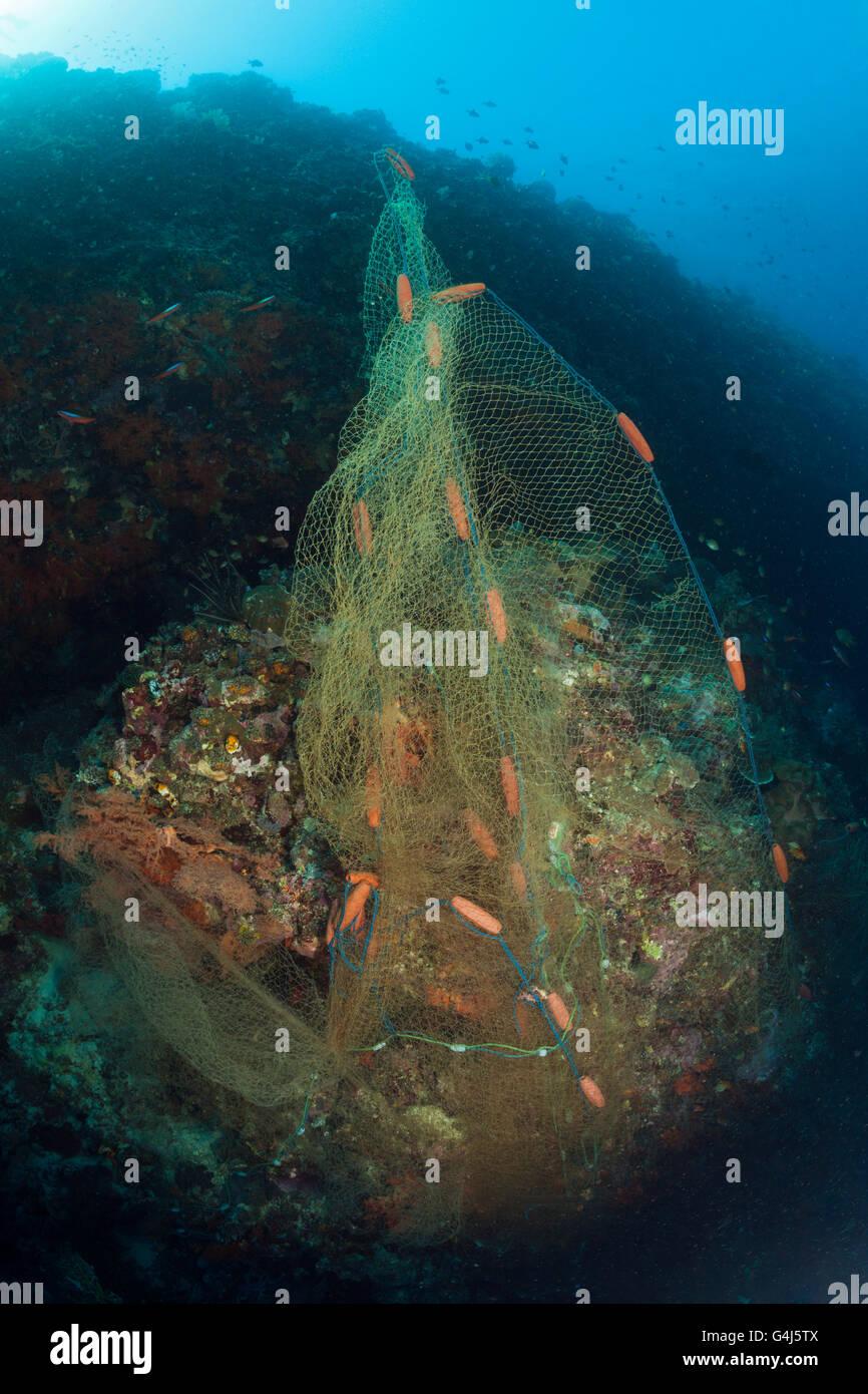Verloren, Angeln Net Abdeckungen Korallenriff, Indo Pazifik, Indonesien Stockbild