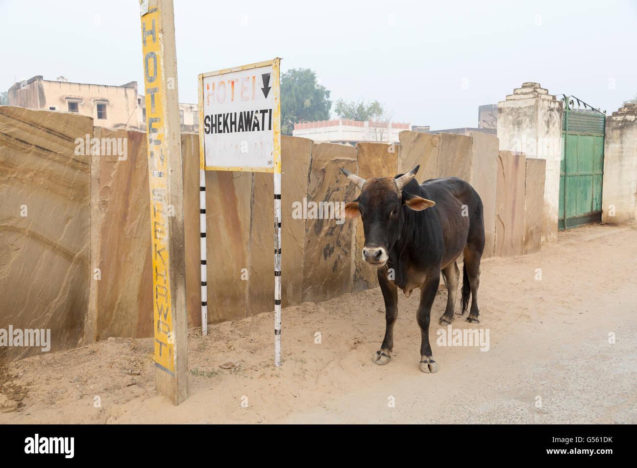 Strassenszene, Mandawa, Rajasthan, Indien Stockbild