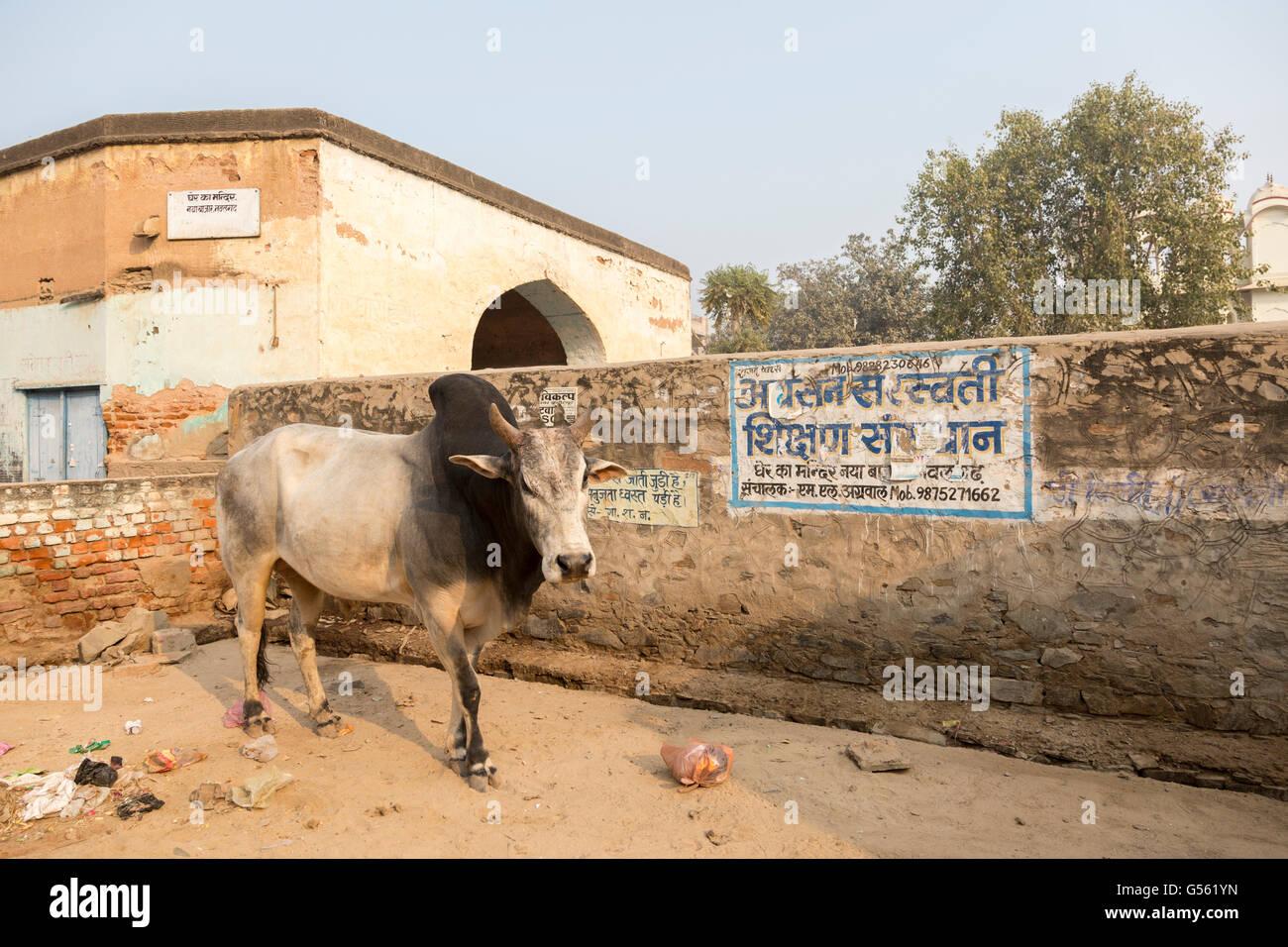 Strassenszene, Fürstenstaates, Rajasthan, Indien Stockbild