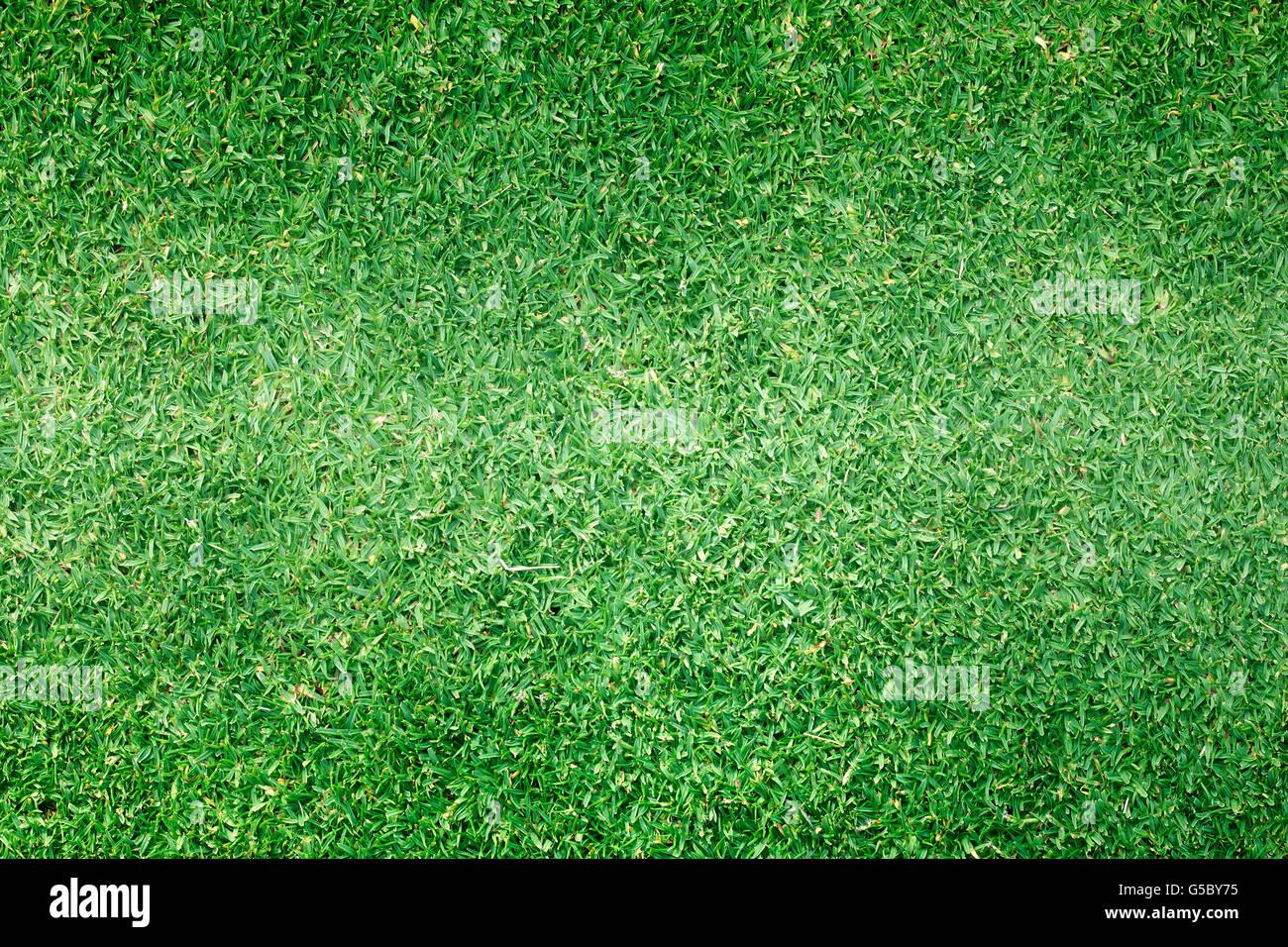 Golfplätze grünen Rasen Muster strukturierten Hintergrund. Stockfoto