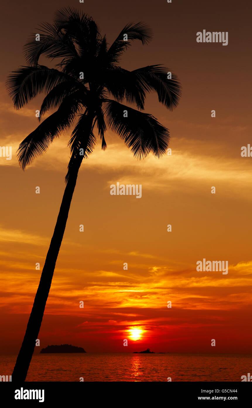 Palm Tree Silhouette bei Sonnenuntergang, Insel Chang, Thailand Stockbild