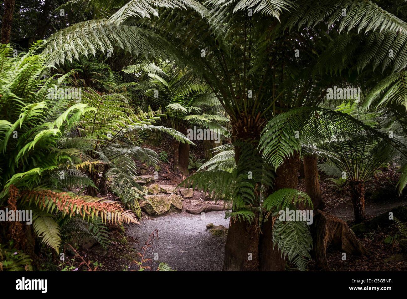 Gärten In Cornwall trebah gärten in cornwall stockfoto bild 106691250 alamy