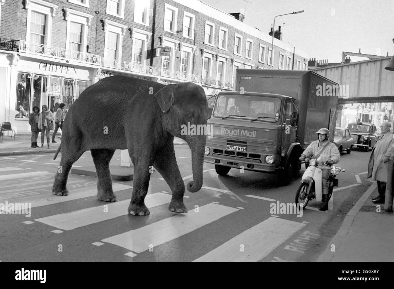 Zirkus - Gerry Cottle Circus - Camden Lock, London Stockbild