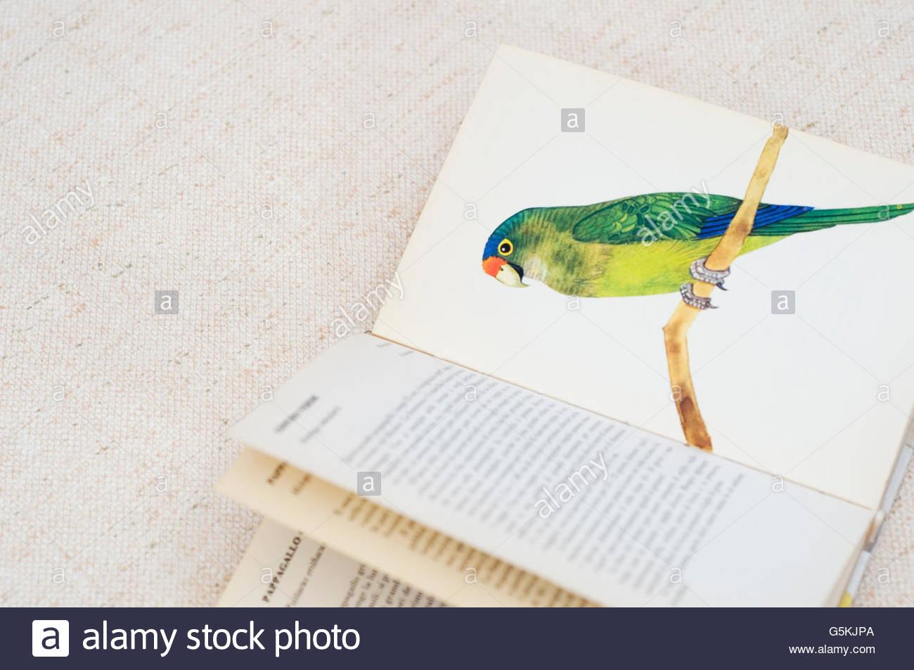 Papagei-Abbildung auf der Buchseite Stockbild