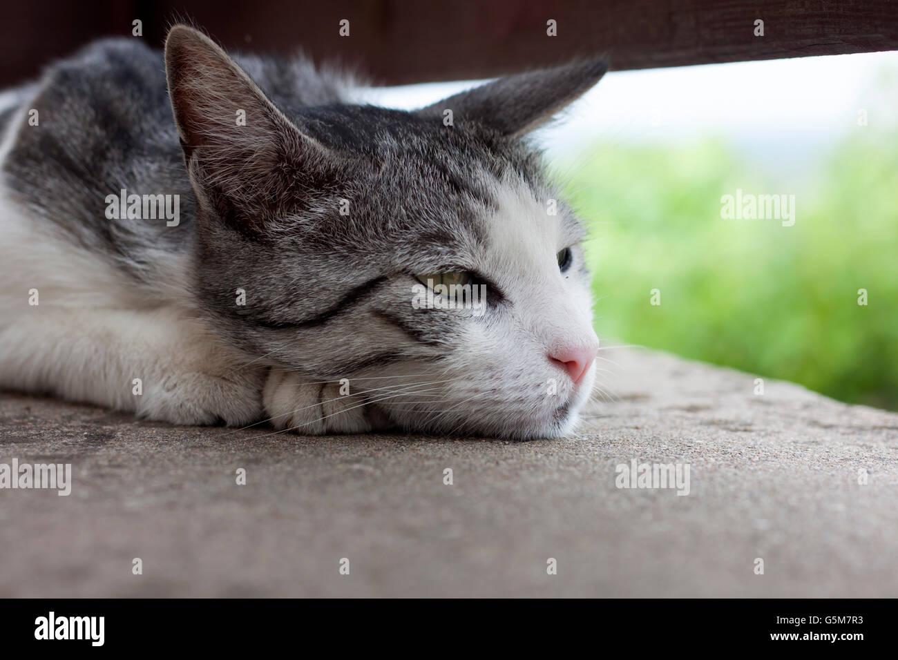 Nostalgische Katze Stockbild
