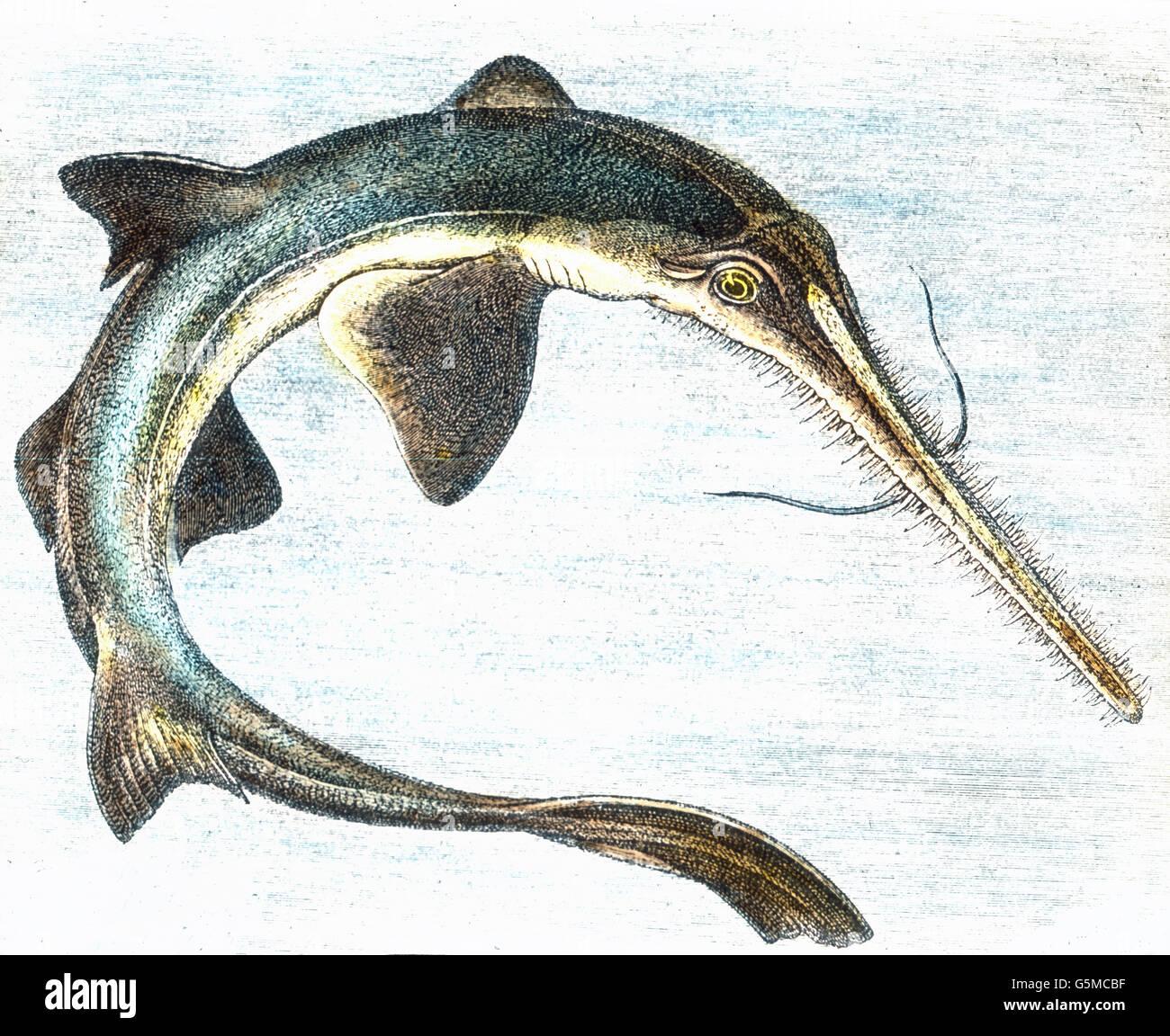 Wunderbar Fische Färben Bilder Zeitgenössisch - Malvorlagen-Ideen ...