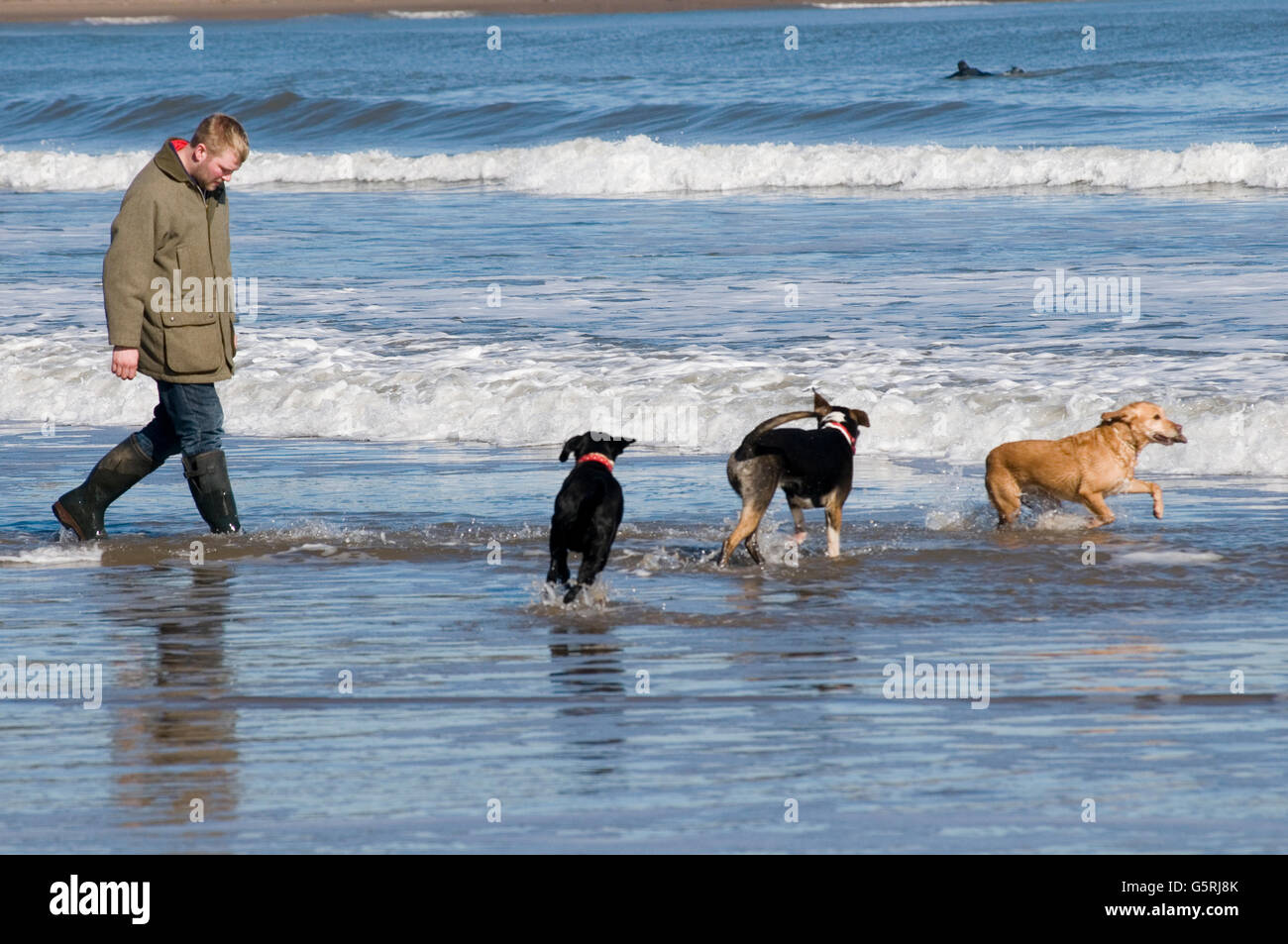 Mann zu Fuß Hunde am Strand Strände Hund gehen Gassi Meer Surfen, laufen, laufen im Vereinigten Königreich Stockfoto
