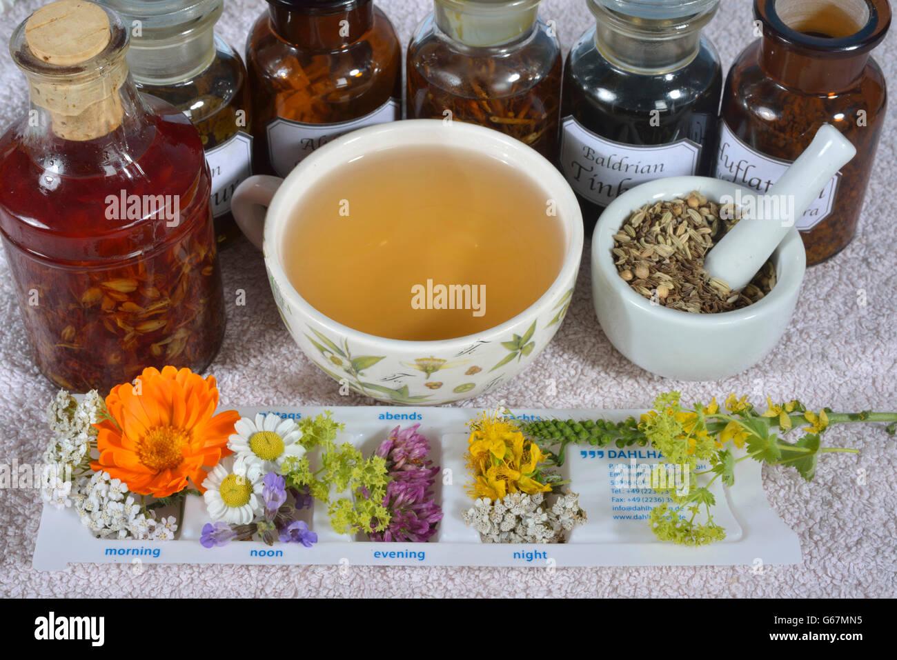 Tägliche Pille Box und heilende Pflanzen Stockfoto