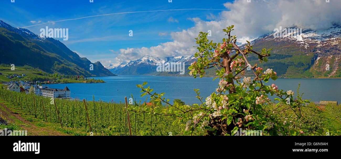 Hardangerfjord in Norwegen Stockbild