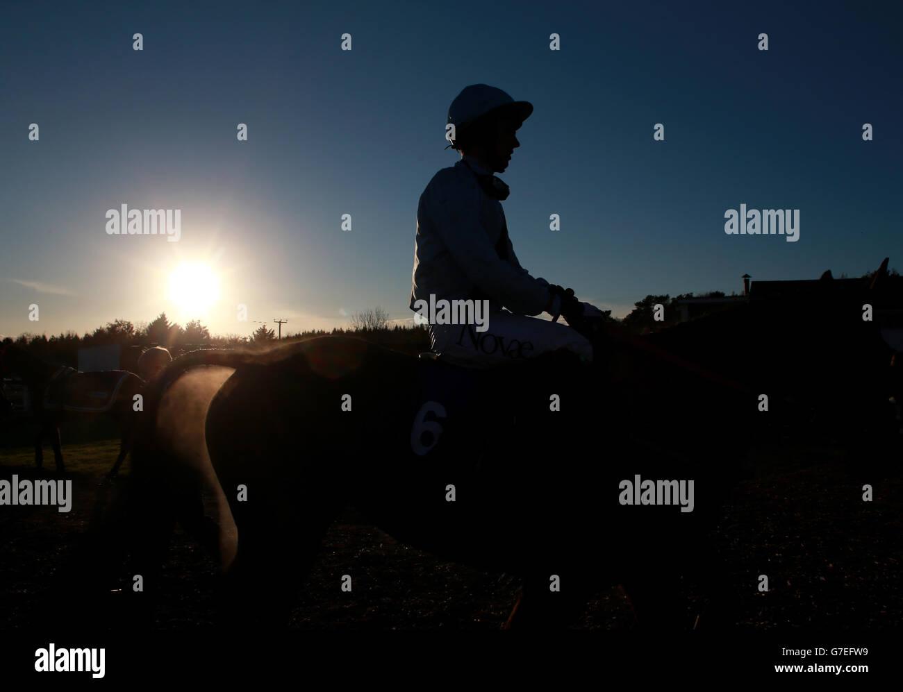 Pferderennen - Exeter Stockbild