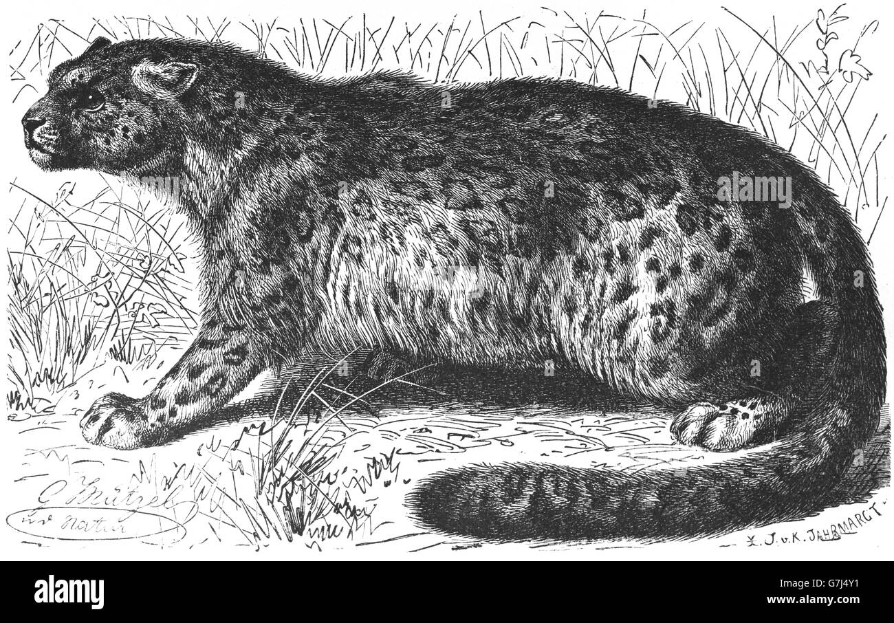 Leopardendatierung